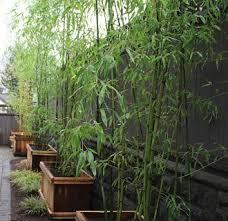 Privacy Backyard Ideas Garden Privacy Backyard Garden Ideas 12 Cool Garden Privacy Ideas