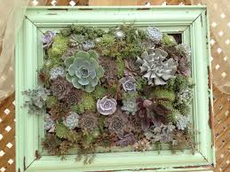 framed succulents a beginner u0027s guide to loving and growing