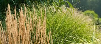 ornamental grasses class longwood gardens