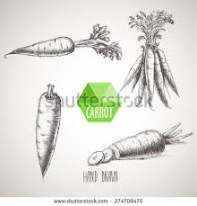 carrot illustration stock images royalty free images u0026 vectors