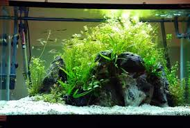Aquascape Layout A Guide To Aquascaping The Planted Aquarium