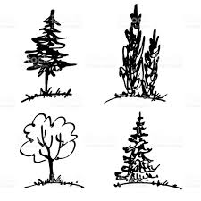 White Oak Tree Drawing Trees Drawing By Marker Simple Hand Drawn Sketches Stock Vector