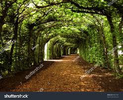 walkway trees stock photo 98027561