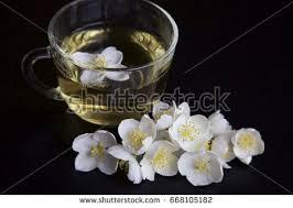 Jasmine Tea Flowers - white tea flower stock images royalty free images u0026 vectors
