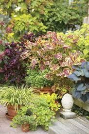 shade gardening colorful shade tolerant plants birds u0026 blooms