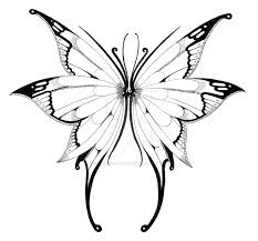 butterfly wings picture photos pictures and sketches