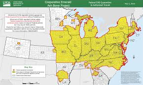 emerald ash borer map purple traps set to study emerald ash borer beetle vestaviavoice com