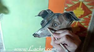italian greyhound time lapse prismacolor colored pencil speed