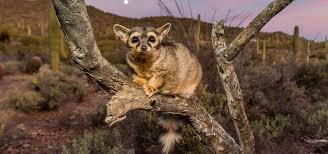 Arizona wild animals images Tucson plants and animals desert wildlife flora and fauna jpg