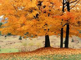 images of beautiful autumn trees sc