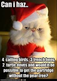 Merry Christmas Cat Meme - funny christmas cat memes funny pics story