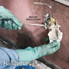 How To Prevent Black Mold In Bathroom How To Remove Mold Mold Remediation U2014 The Family Handyman