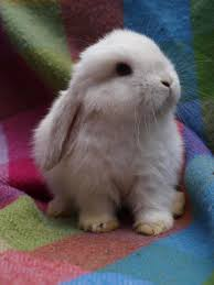 i was thinking about getting a bunny for months this picture took