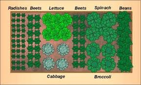awesome small vegetable garden layout 17 best ideas about
