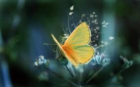 beutifull beautiful wallpaper 4410 1680x1050 px hdwallsource com