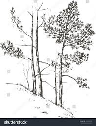 pine trees grass hill drawing by stock vector 438985828 shutterstock