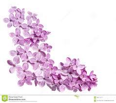 lilac corner stock image image 28271171