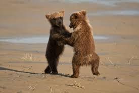 Dancing Bear Meme - dancing bears meme generator imgflip