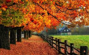 autumn wallpaper exles for your desktop background
