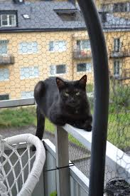 my cats can u0027t go outside but they enjoy the catio life cats