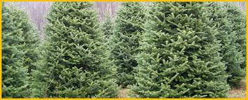 christmas tree farms nc mountain log cabin rental