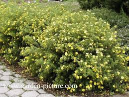 Flowering Shrubs For Partial Sun - 25 beautiful shade shrubs ideas on pinterest shade loving