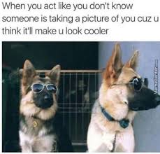 Cool Dog Meme - cool dog memes best collection of funny cool dog pictures