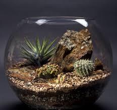cactus terrarium large design pinterest cactus terrarium