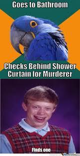 Paranoid Parrot Memes - rmx paranoid parrot by rakelo meme center