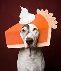 Thanksgiving Cat Meme - challenge dogs to a thanksgiving fashion showdown
