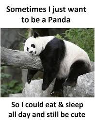 Panda Mascara Meme - panda without mascara best image of panda 2018
