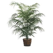 The Best Indoor Plants The Best 10 Indoor Plants That Purify The Air