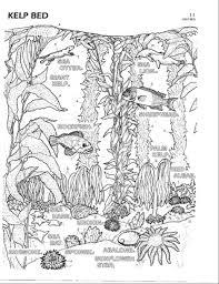 color plate 11 kelp bed cecil u0027s nursery kelp forest pinterest