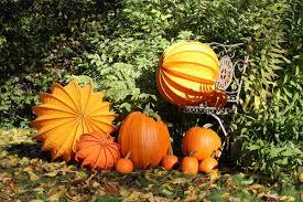free images flower orange pumpkin halloween holiday yellow