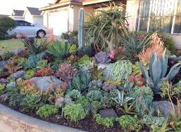 amazing succulant garden 25 unique succulents garden ideas on