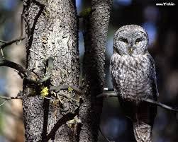 birds baby owl on tree owls wallpapers yah in