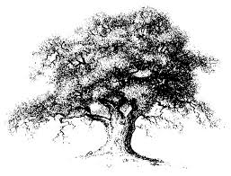 tree sketch clipart