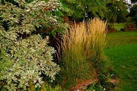 garden design ornamental grasses