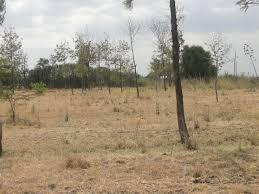 Land Plots For Sale by Denko Properties Land Plots For Sale Juja Farm