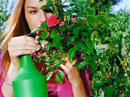 homemade flower garden pesticide