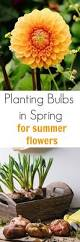 best 25 summer flowering bulbs ideas on pinterest summer