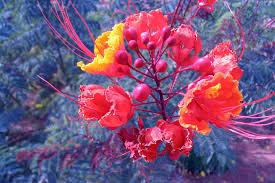 flowers las vegas unlv desert flowers las vegas photos aravinda loop
