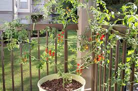 Trellis For Cucumbers In Pots How To Grow Tomatoes In Pots Bonnie Plants
