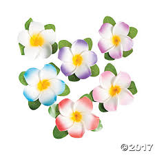 plumeria flower flower hair