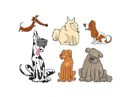 afghan hound least intelligent canine intelligence u2014breed does matter psychology today