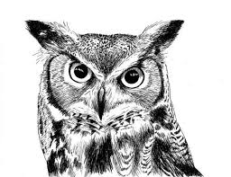 99 best owl sketches images on pinterest owl art drawings and