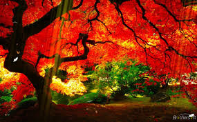 animated thanksgiving screensavers download free planet garden screensaver planet garden screensaver