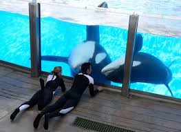 Animal Trainers Salary Whale That Killed Trainer Returns To Seaworld Show Thecabin Net