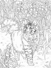 colouring cats dogs image gallery cat coloring book pages