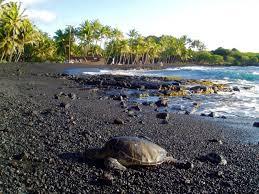 black sand beach hawaii punalu u black sand beach big island turtles swimming and